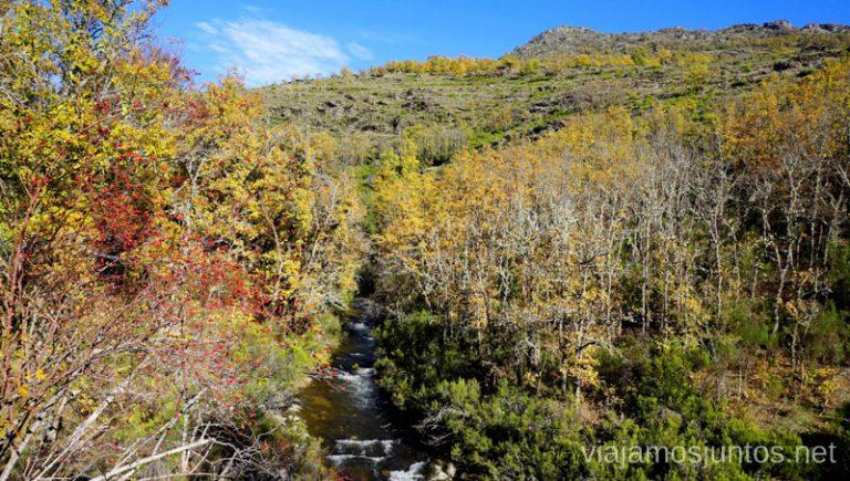 Hayedo de Montejo en otoño.