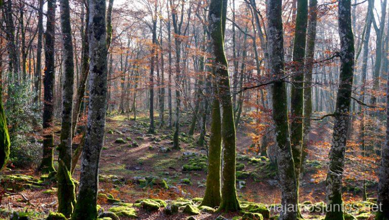 Hayedo de Altube en Parque Natural de Gorbeia, País Vasco.