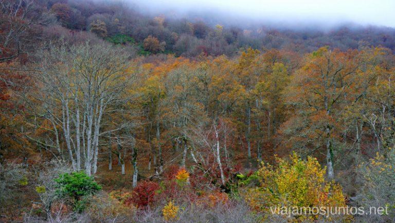 Dónde ver hayedos en otoño en España.
