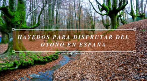 Hayedos para disfrutar del otoño en España.