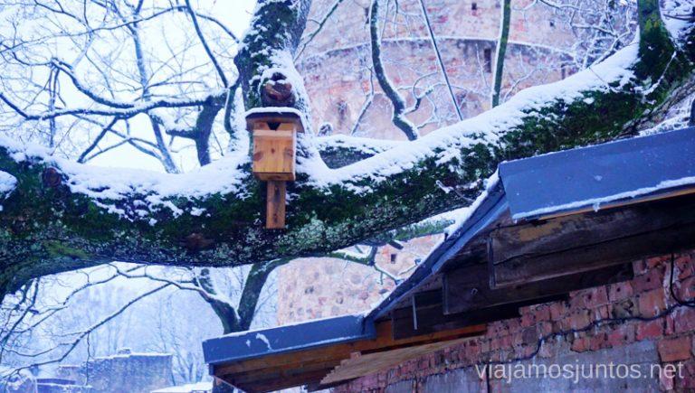 Jardín del Castillo Viejo. Viajar a Países Bálticos en invierno.