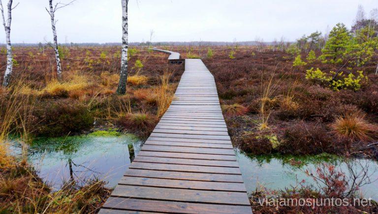 Pasarelas de Aukstumala. Qué ver y hacer en el Parque Regional Delta del Nemunas Países Bálticos en invierno.