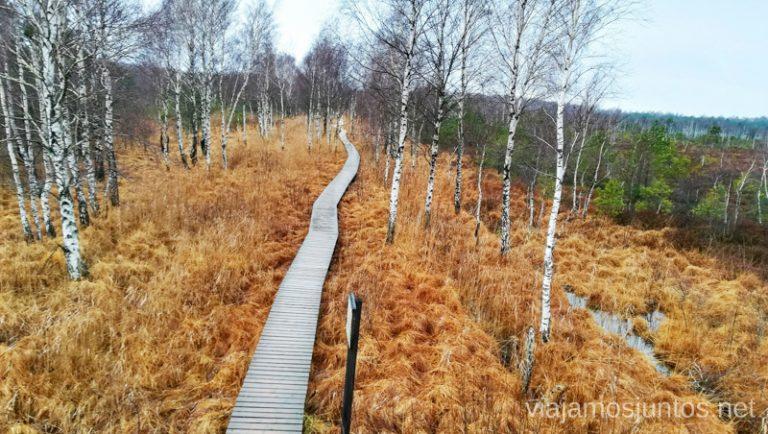 Sendero a Aukstumala. Qué ver y hacer en el Parque Regional Delta del Nemunas Países Bálticos en invierno.