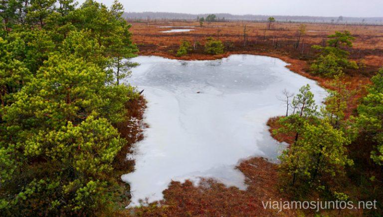 Lagos naturales entre las ciénagas del sendero a Aukstumala, Minge. Qué ver y hacer en el Parque Regional Delta del Nemunas Países Bálticos en invierno.