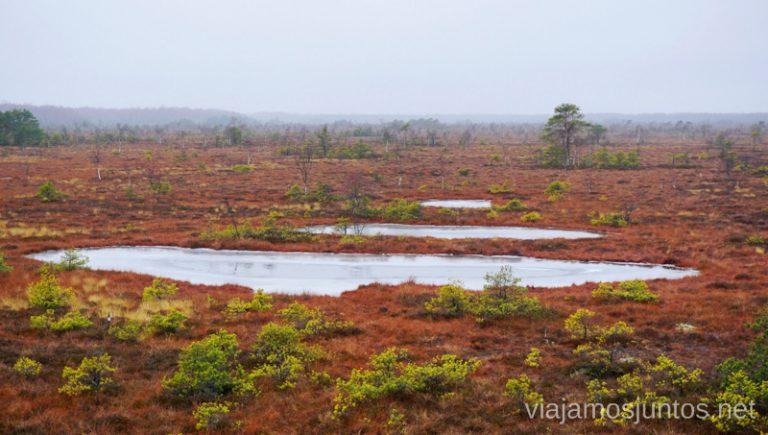 Sendero Aukstumala. Qué ver y hacer en el Parque Regional Delta del Nemunas Países Bálticos en invierno.