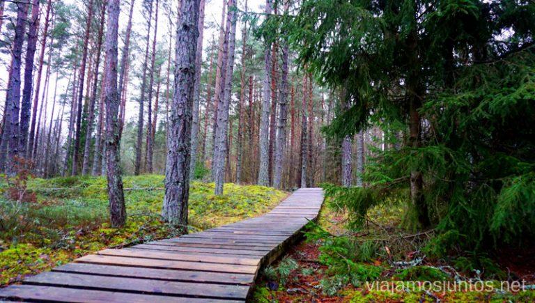 Ruta de la Duna Blanca de la península de Kurzeme. Viajar a Países Bálticos en invierno.