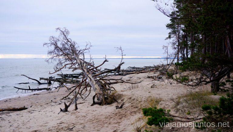Paisaje destrozado por el temporal. Viajar a Países Bálticos en invierno.