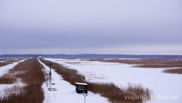 Ploters del lago Lubans. Viajar a Países Bálticos en invierno.