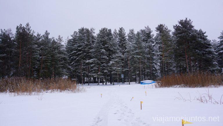 Lagos de Letonia rodeados de bosques. Viajar a Países Bálticos en invierno.