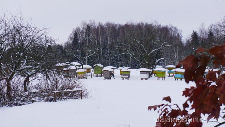 De camino a la región de los lagos de Letonia - Latgale. Viajar a Países Bálticos en invierno.