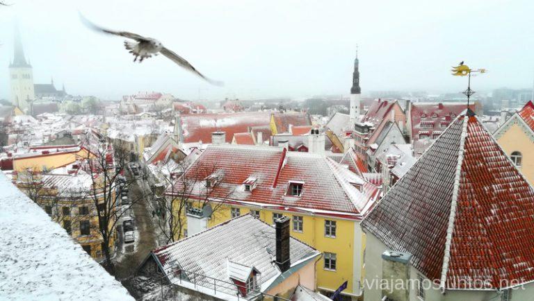 Qué ver en Tallin: las mejores vistas del casco antiguo. Viajar a Países Bálticos en invierno.