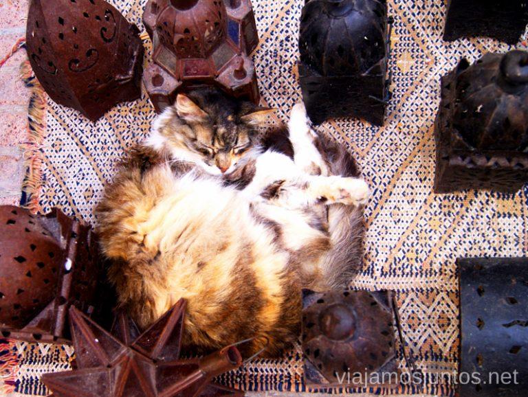 ¿Alguien necesita comprar un gato en Marruecos?