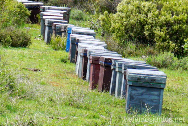 El reino de la abejas en GR 303, Sierra Norte de Madrid.