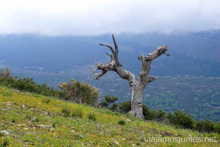 Árbol solitario en GR 303.