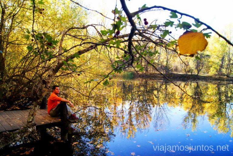 Bosque finlandés cerca de Rascafría. Parque Nacional Sierra de Guadarrama.