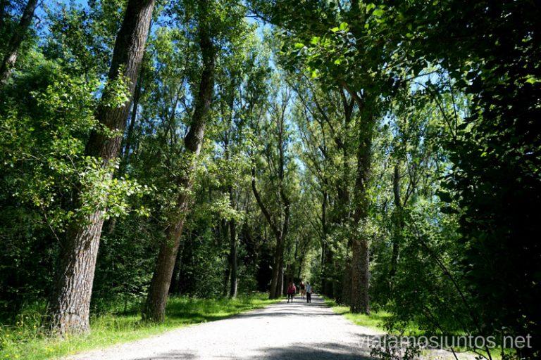 Paseando por el Bosque Finlandés en verano.