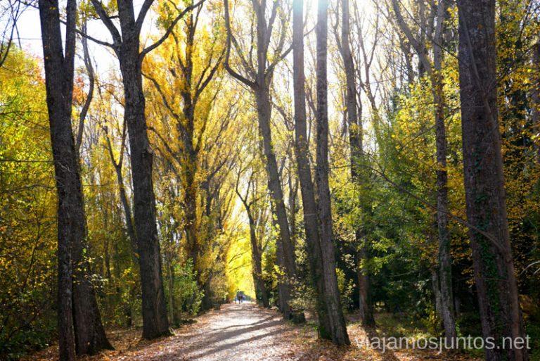 Paseando por el Bosque Finlandés en otoño.
