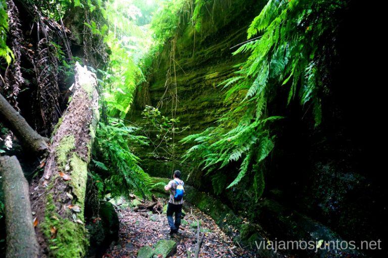 Explorando la ruta del Cubo de la Galga. Rutas de senderismo en la Palma.