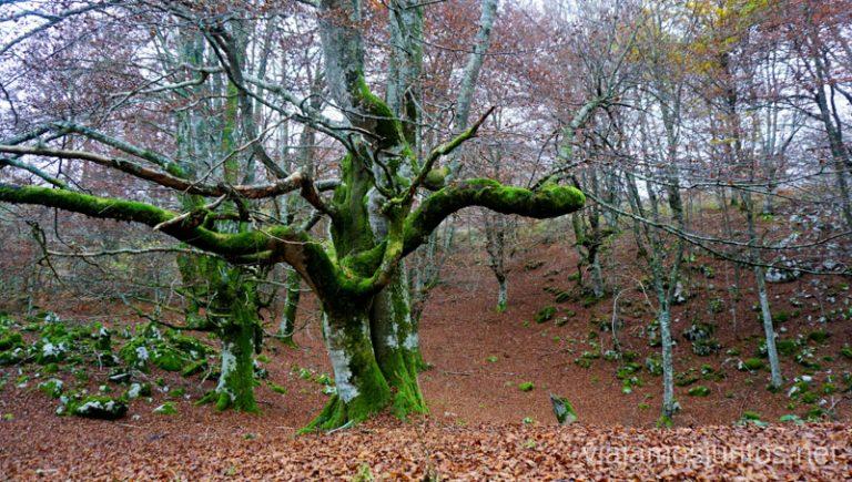 Caminata a la Cueva Mairuelegorreta. Qué ver y hacer en el País Vasco. Parque Natural de Gorbea.