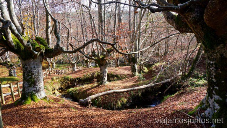 Hayedo cerca de la Casa del Parque en Gorbea. Rutas de senderismo en el País Vasco. Qué ver y qué hacer.