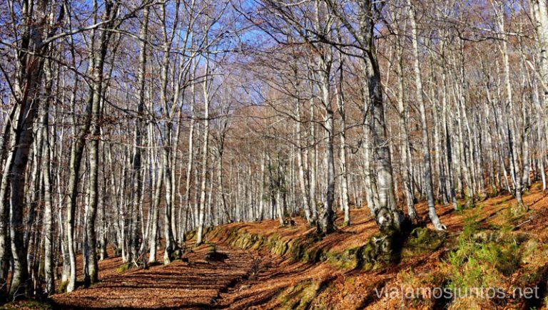 Tramo por pista hacia las Burbonas. Rutas de senderismo en el País Vasco. Qué ver y qué hacer.