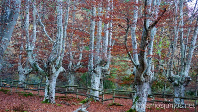 Casa del Parque de Gorbeia. Rutas de senderismo en el País Vasco. Qué ver y qué hacer.