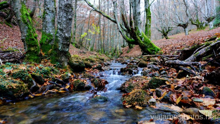 Ríos mágicos en el hayedo de camino a la Cueva de Mairuelegorreta. Rutas de senderismo en el País Vasco. Qué ver y qué hacer.