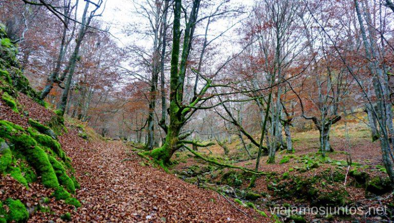 Camino a la Cueva de Mairuelegorreta. Rutas de senderismo en el País Vasco. Qué ver y qué hacer.