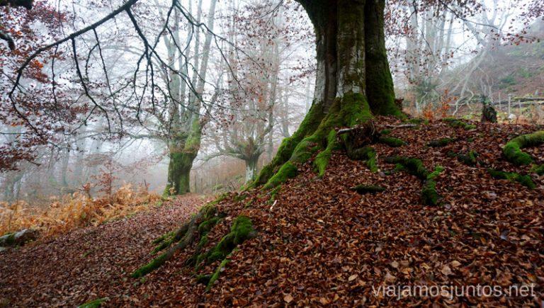 Hayedos alrededor de la Cueva de Mairuelegorreta. Rutas de senderismo en el País Vasco. Qué ver y qué hacer.