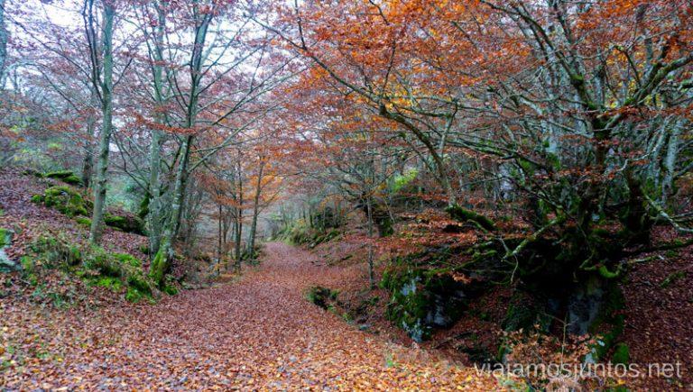 Camino a las Canteras de Gorbeia. Rutas de senderismo en el País Vasco. Qué ver y qué hacer.