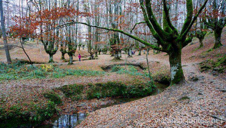Rutas por los hayedos del parque natural de Gorbeia, País Vasco. Rutas de senderismo en el País Vasco. Qué ver y qué hacer.