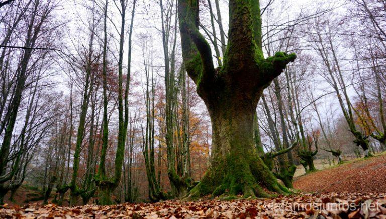 Ruta de la Cueva de Mairuelegorreta por un precioso hayedo. Rutas de senderismo en el País Vasco. Qué ver y qué hacer.