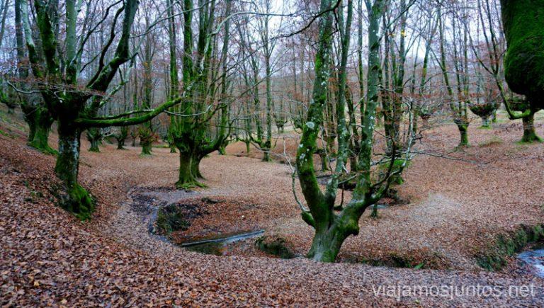 Hayedo Otzarreta, Parque Natural de Gorbeia. Rutas de senderismo en el País Vasco. Qué ver y qué hacer.
