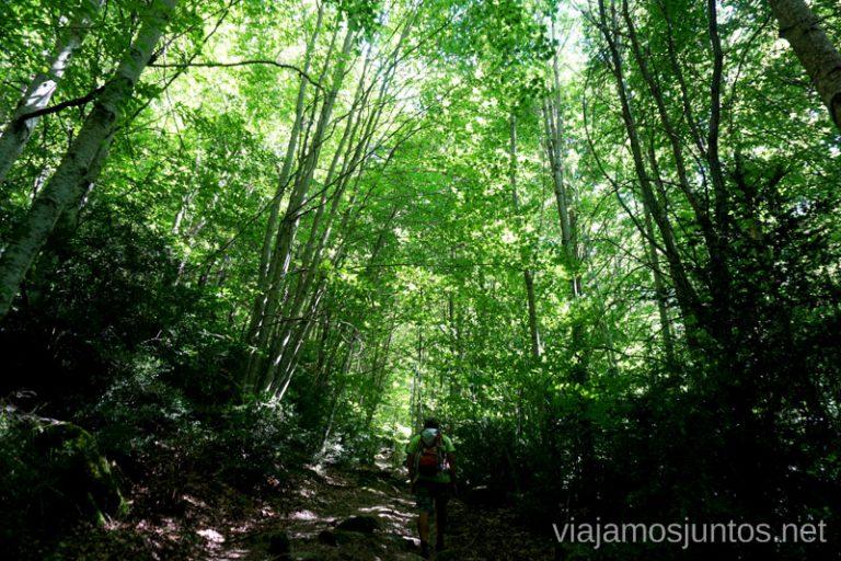 Bosques de hoja caduca en el Valle de Hecho.
