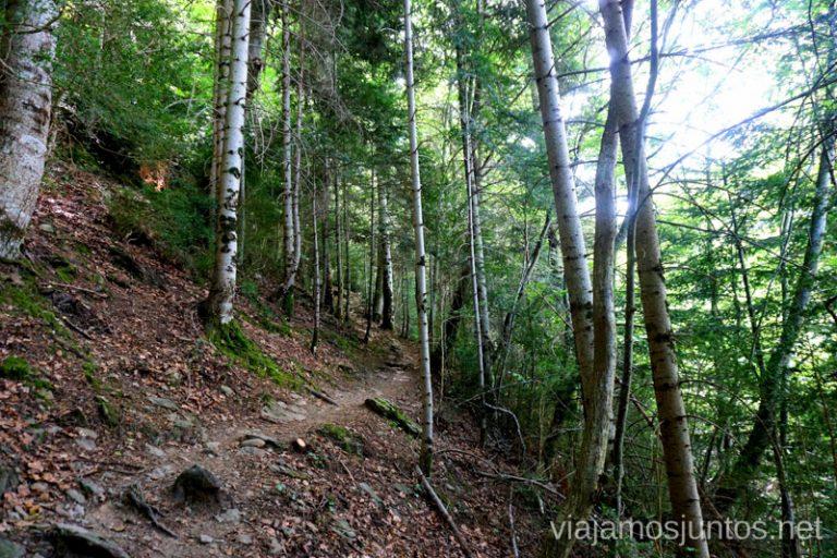Senda de los Ganchos por un camino estrecho entre hayas. Qué ver y hacer en el Valle de Hecho (Echo), Jacetania, Huesca, Aragón
