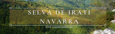 Selva de Irati, Navarra.