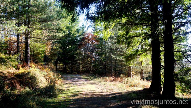 Pinar en la ruta de las Burbonas. Rutas de senderismo en el País Vasco. Qué ver y qué hacer.
