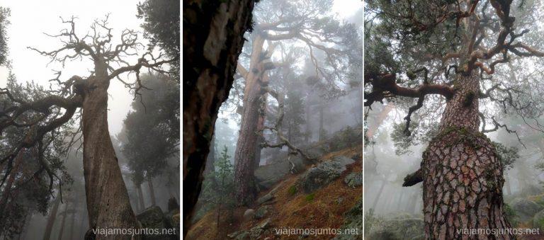 Bosque encantado. Rutas de senderismo desde el Pto de Navacerrada, Madrid.