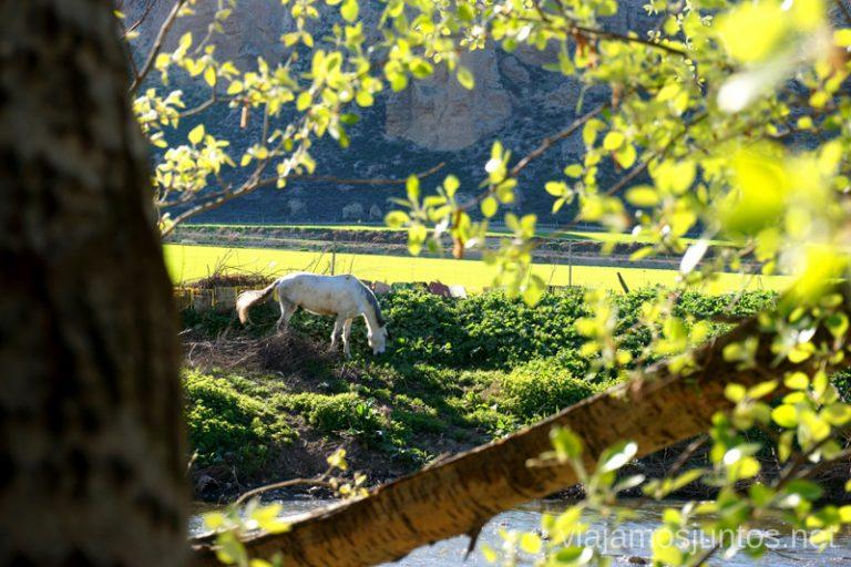 Caballo y huertas entre el río Manzanares y los cantíles yesíferos de la Marañosa. Rutas de senderismo fáciles en Rivas-Vaciamadrid y sus alrededores.