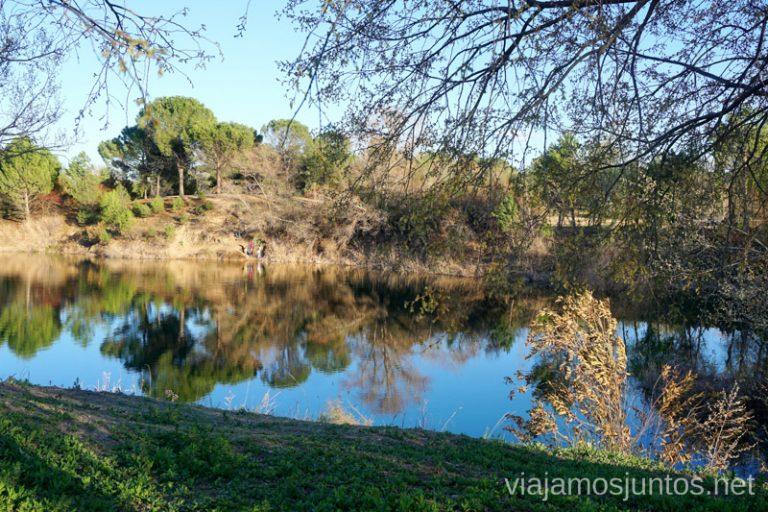 Lagunas de las Madres - un paisaje idílico. Rutas de senderismo fáciles en Rivas-Vaciamadrid y sus alrededores.