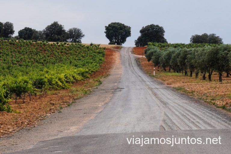 Viñedos y olivares en Valdepeñas. Cuevas y bodegas de la ruta del vino de Valdepeñas, Castilla-La Mancha.