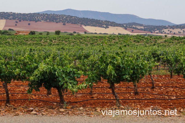 Vistas de los viñedos de las Bodegas Real. Cuevas y bodegas de la ruta del vino de Valdepeñas, Castilla-La Mancha.