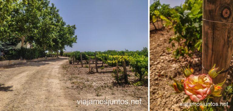 Bodega D. Florentino Pérez en Casas de Juan Núñez. Ruta del Vino de la Manchuela, Castilla-La Mancha.